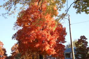 Fall Color.7234