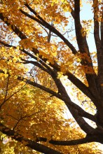 Fall Color.7242