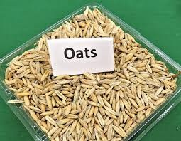 10 Proven Health Benefits of Oats You Need to Know