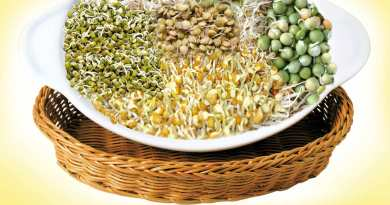 Different Types of Sprouts That Should Be Included in Your Diet