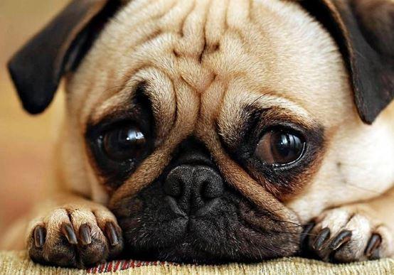 8 Alimentos que los perros NO deben consumir nunca