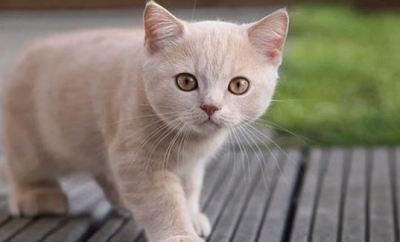 El increíble descubrimiento sobre los gatos como terapeutas holísticos