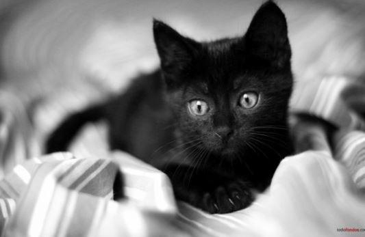 La personalidad de los gatos según su color