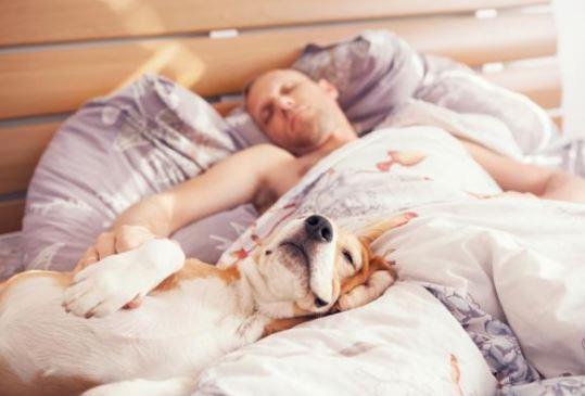 Si duermes con tu perro en la cama, la ciencia asegura