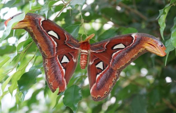 5 insectos gigantes que existen en nuestro planeta