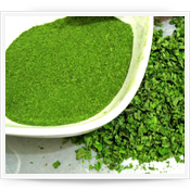 Moringa Oleifera - Hoja Seca en Polvo