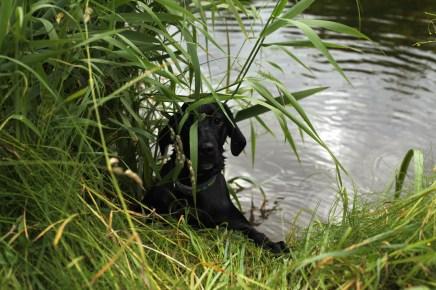 waterdog4