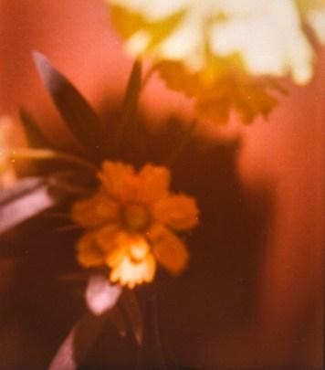 flores amarillas dos
