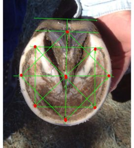 perceived measurements of the hoof