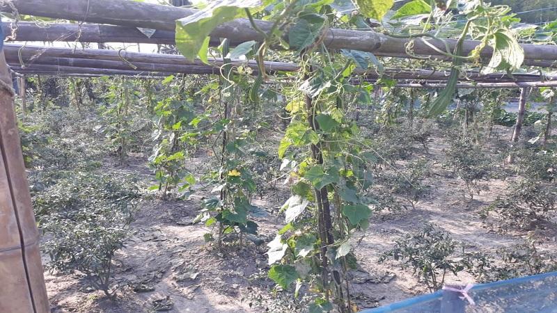 Assam Farm
