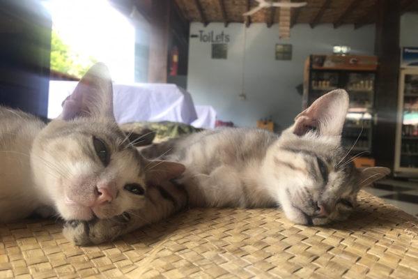 Süsses Katzenleben