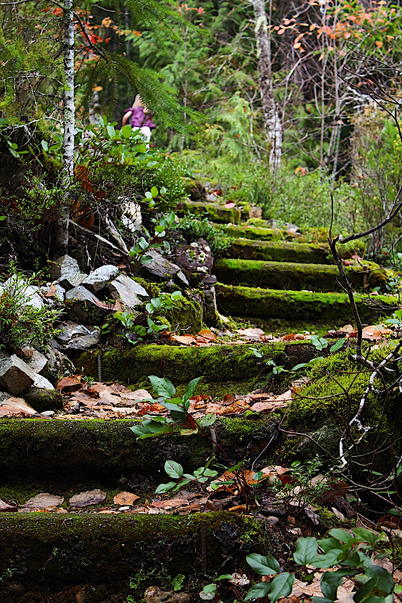 Mossy forest stairs
