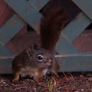 Curious Critter