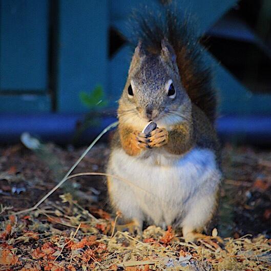 Sally Squirrel