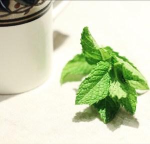 Fresh Peppermint for Tea