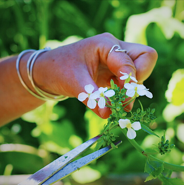 Flowers from Vegetables are Delicious in Salads