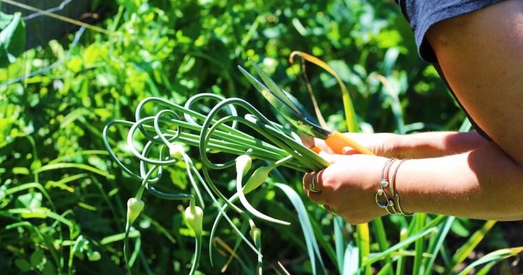 The Green Family Farm – Hobby Farming On Vancouver Island and Fresh Seasonal Salmon and Salad Recipes