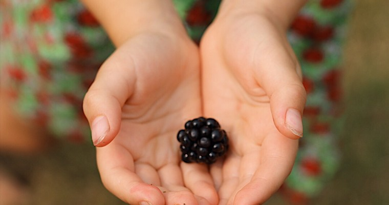 BC Blackberry Season + 5 New Easy Blackberry Recipes