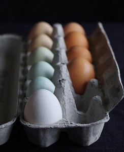 Carton Of Multicolored Eggs From Angela Menzies
