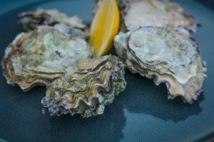 Fresh Fanny Bay Oysters On Vancouver Island