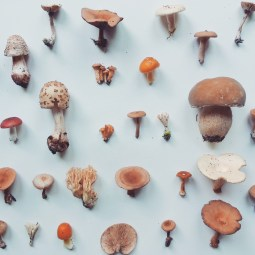 """""""Mushrooms (1)"""" from """"Collections"""", an Instagram project; digital, 2015"""
