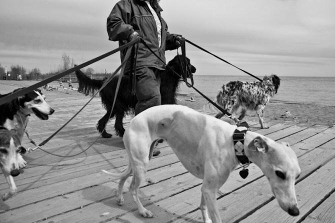 the dog walker - urban dog toronto 2011