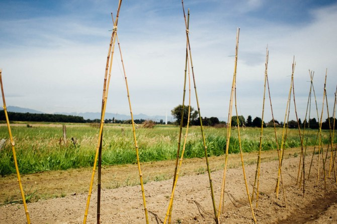 sweet digz farm steveston richmond bc