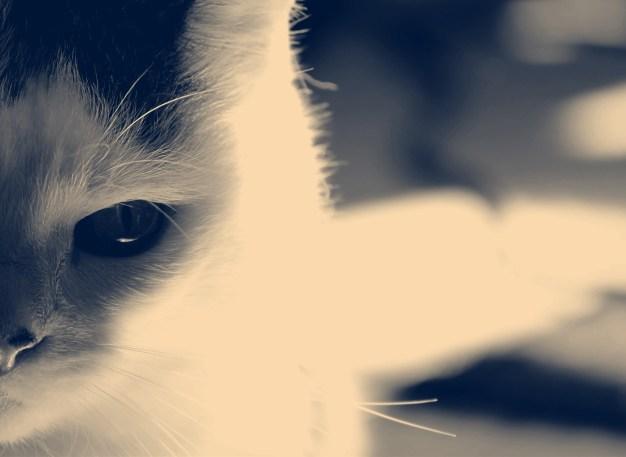 cat-in-monochrome