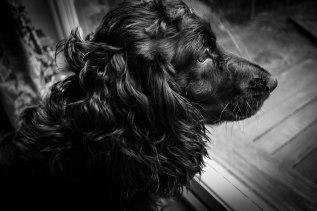 dog-in-monochrome