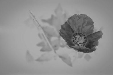 inverted-flower-monochrome