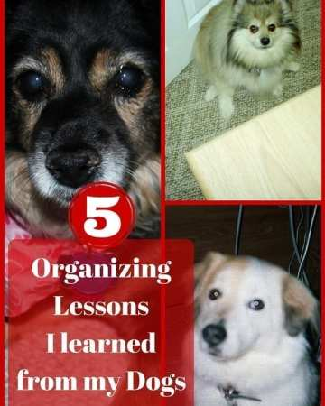 Organizing Lessons I learned from my Dogs | Sabrina's Organizing