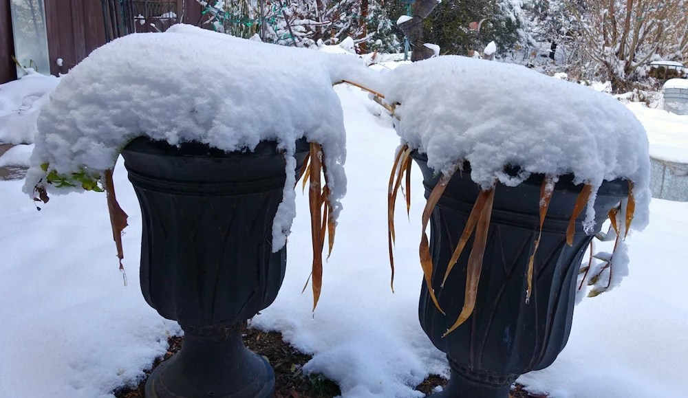 Christmas morning snow of planter boxes