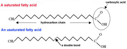 The Open Door Web Site : IB Biology : Molecules of Life