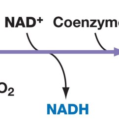 the diagram above illustrates the conversion of pyruvate to acetyl coa [ 1402 x 577 Pixel ]