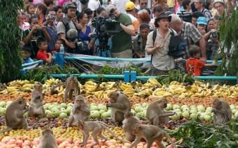 monkeys-tourists_2409773k