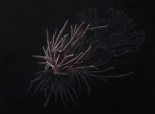 R.Blatman_Bleached_Coral2