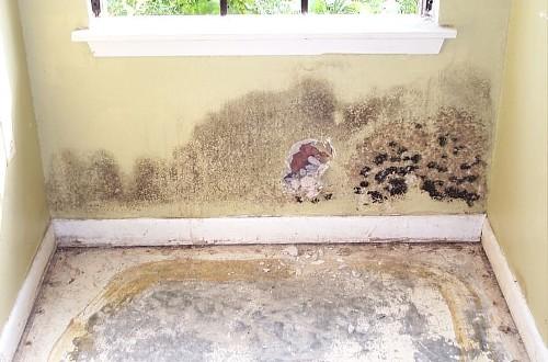 mold (11)