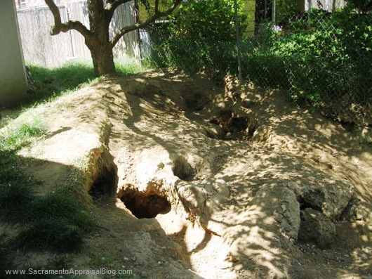 holes in backyard from dogs - by sacramento appraisal blog