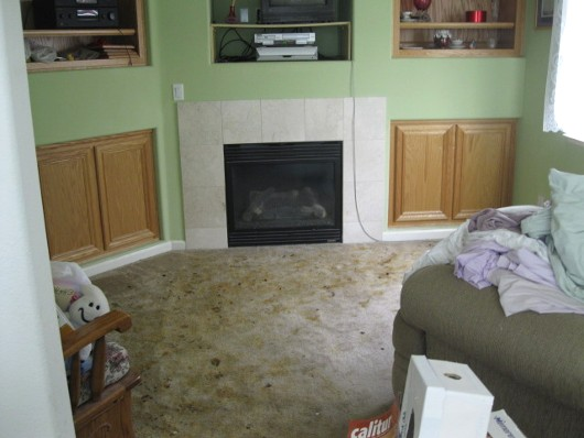 dog pee and poo in a house - by sacramento appraisal blog