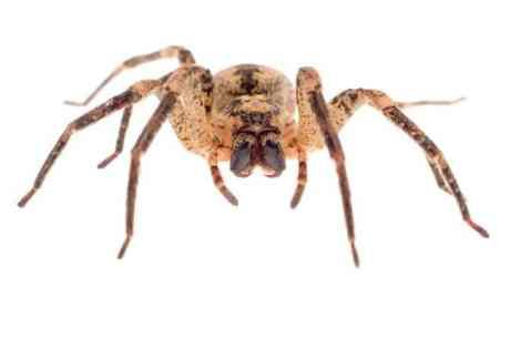Spider Bite Symptoms Can Be a Pain - Sacramento Press