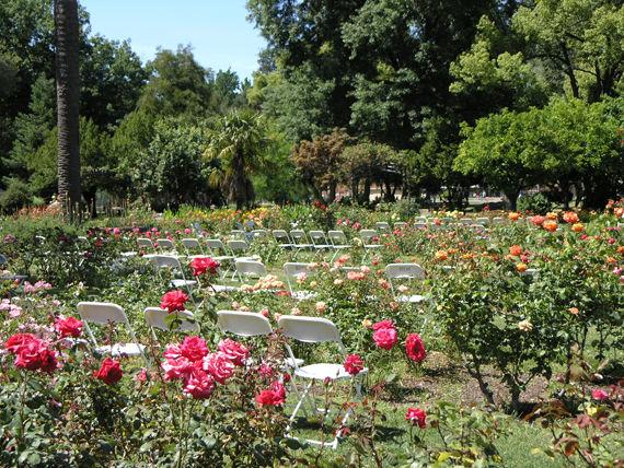 Delicieux McKinley Park Rose Garden