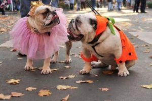 halloween pooch - This Weekend! Midtown Trick-Or-Treat & Pooch Parade