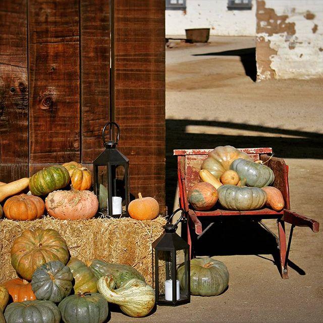 Sacramento's Fall-Decorated Doorways | Photo Gallery
