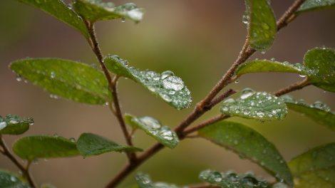 Raindrops on Leaves - Mesmerizing Raindrops