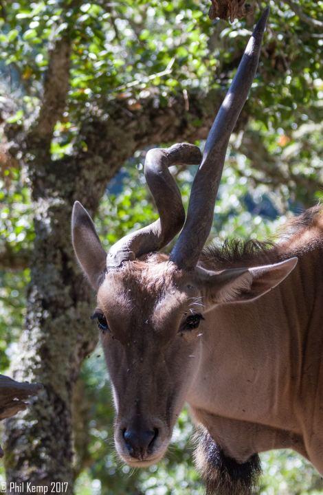 MG 4236 470x720 - Safari West: Africa Hidden in the Santa Rosa hills
