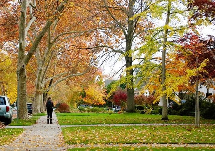 Fall in Sacramento 2017 18 720x506 - Sacramento: Best City in California for Fall Colors?