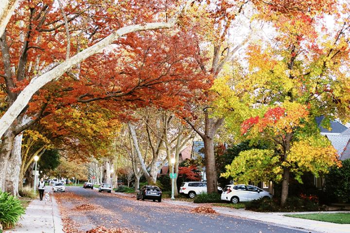 Fall in Sacramento 2017 3 720x480 - Sacramento: Best City in California for Fall Colors?