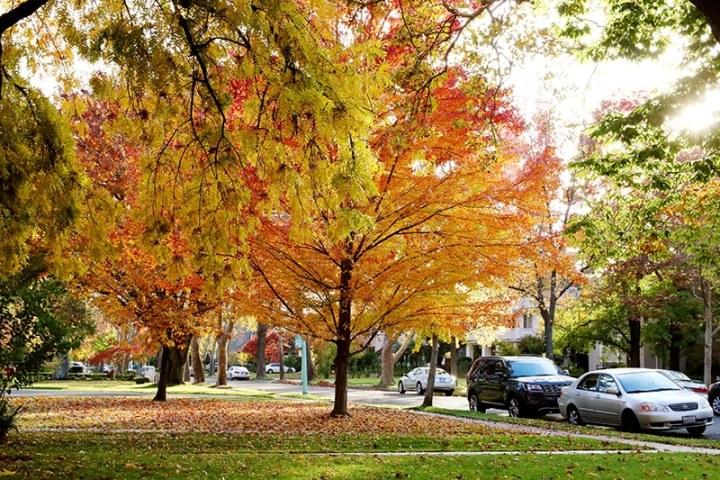 Fall in Sacramento 2017 8 720x480 - Sacramento: Best City in California for Fall Colors?