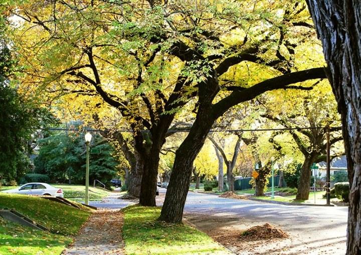 Fall in Sacramento 24 720x508 - Sacramento: Best City in California for Fall Colors?
