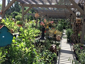Picture of interior of Talini's Nursery & Garden Center